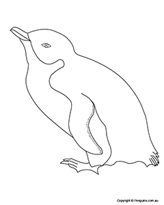 Fairy Penguin Colouring Page